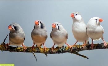 cac loai chim nho di vi khi hau nong len