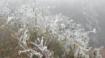 Từ nay (12/1) đến 20/1, không khí lạnh mạnh hơn, Bắc Bộ rét hại quay trở lại