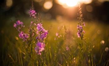 Tử vi ngày 17/9/2020: Tuổi Mùi tin vui bất ngờ, tuổi Thân vướng phải thị phi