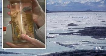 Tìm thấy loài sinh vật mới ở Nam Cực dưới lớp băng 1000 mét