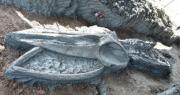 Tìm thấy hóa thạch cá voi cổ đại siêu hiếm 5000 năm ở Thái Lan
